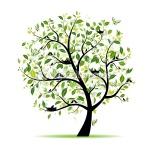 sep tree